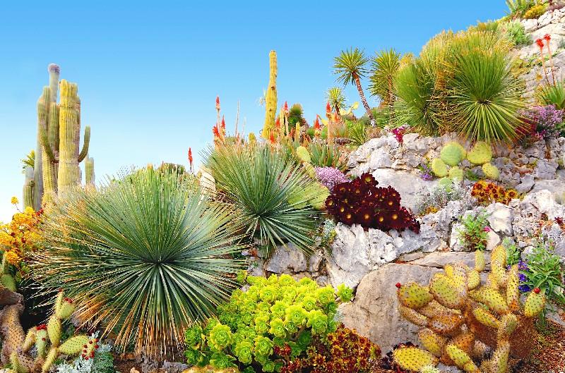 L'essentiel à savoir pour confectionner un jardin exotique à Vichy | Xavier Paysage